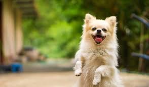 صورة بالفيديو| مش هتصدق.. كلب بيرقص على «واحدة ونص»
